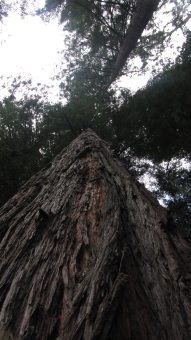 The Redwoods NP